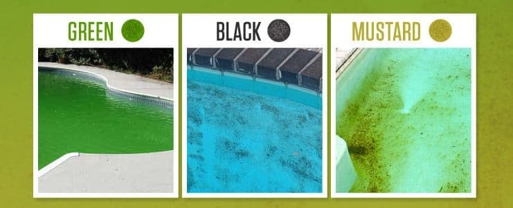 How to Get Rid of Mustard Algae – an Exclusive Guide 2