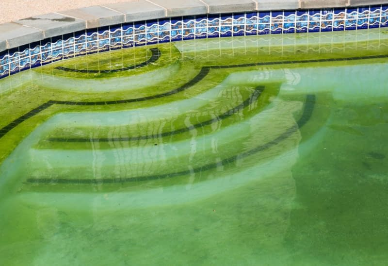 How to Get Rid of Mustard Algae – an Exclusive Guide 3