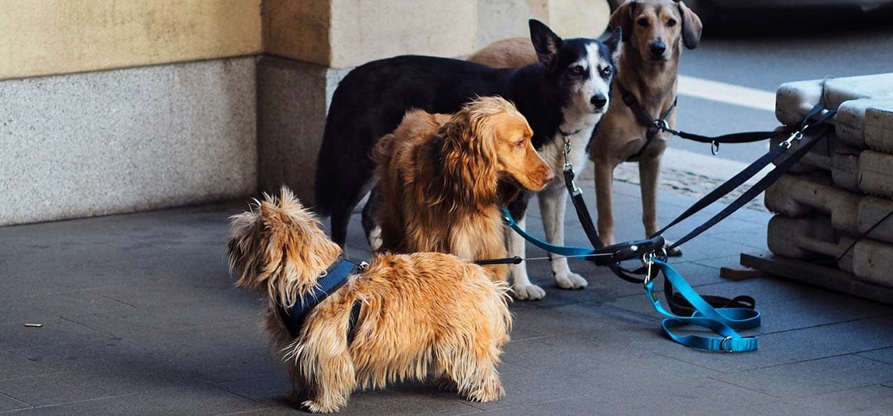 The Best Dog Leashes For Hiking: Reviews & Buying Guide